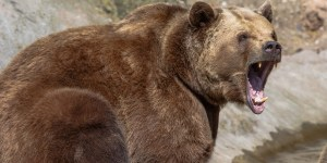 8 Unconventional Ways People Have Fought An Attacking Bear And LIVED!