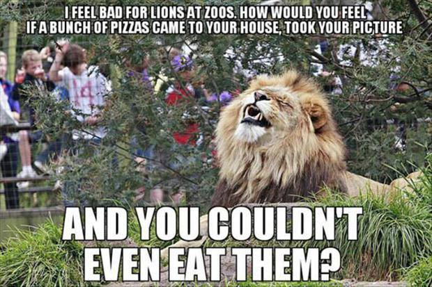 The Picture Jokes thread - Page 2 Must-see-imagery-zoo-lions