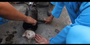 Puppy Stuck In Pipe Gets Soaped Up And Squeezed Out In Adorable Rescue