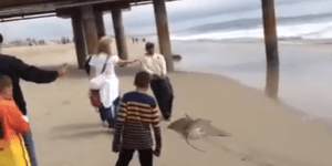 Crazy Lady Loses It When Fisherman Catches Stingray—Wants To 'Put Every German From Germany In Prison'