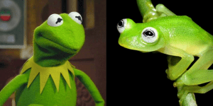 Newly Discovered Species Looks Exactly Like Kermit The Frog, Is Not Big Enough To Diddle Miss Piggy