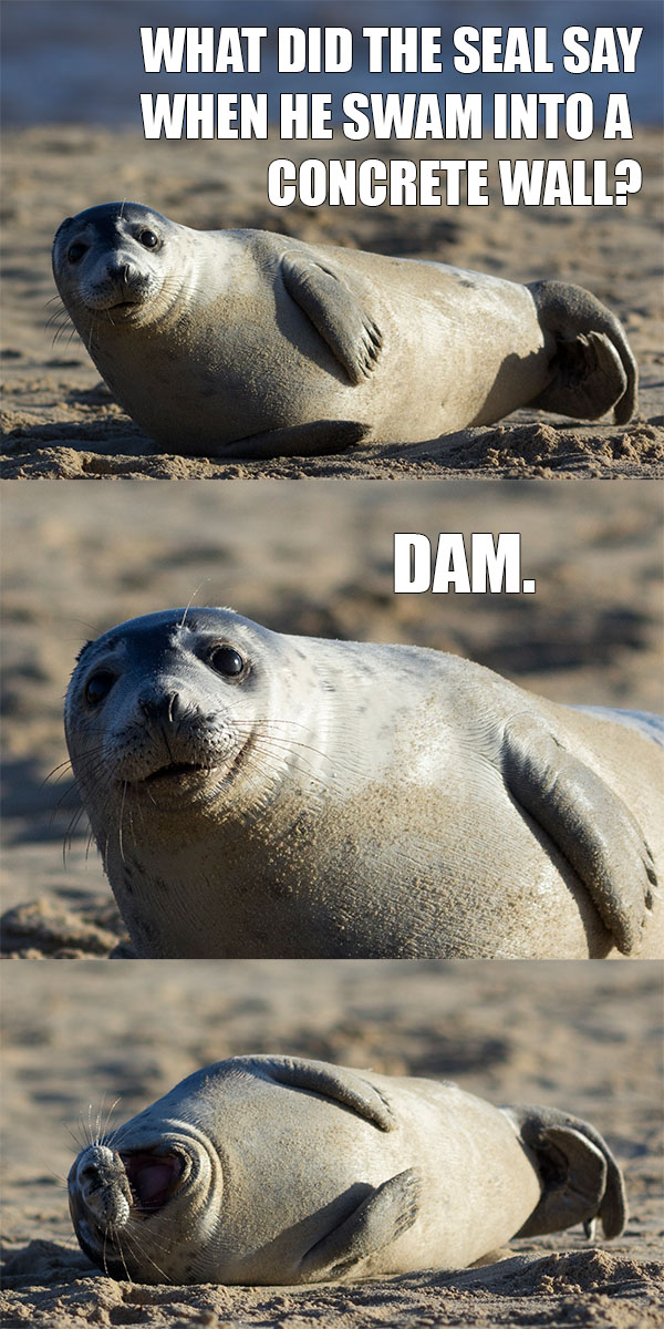The Picture Jokes thread - Page 4 Must-see-imagery-seal-dam-pun