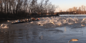The Wash U. Crew Team Got Demolished By An Angry Mob Of Fish