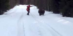 Man Steps To Fronting Bear