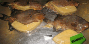 BLOW FISH: Pounds Of Cocaine Found Hidden Inside Fried Fish At Miami Airport