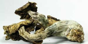 Doctors May Have Uncovered The Best Way To Quit Smoking But Now Here's The Weird News — It's Shrooms
