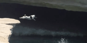 Will You Ever Be As Chill As This Cliff-Diving Dog?