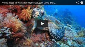 Magnifique vidéo de tortue made in ImprimerieFlyer