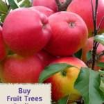 Buy fruit trees online