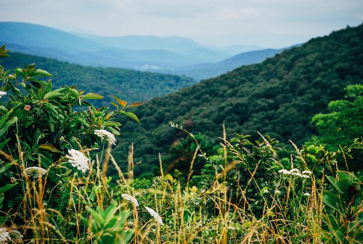 blue ridge mountains // brooklyn supper