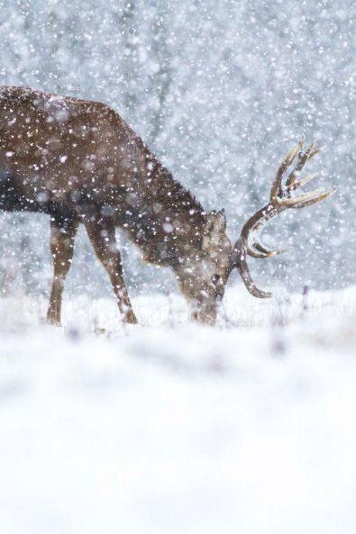 julebryllup-desemberbryllup-vinterbryllup