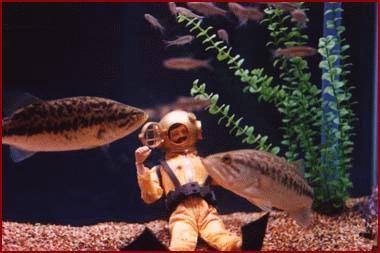 some bass tank pics that i found by googling 'largemouth bass tank