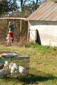 pajam farming