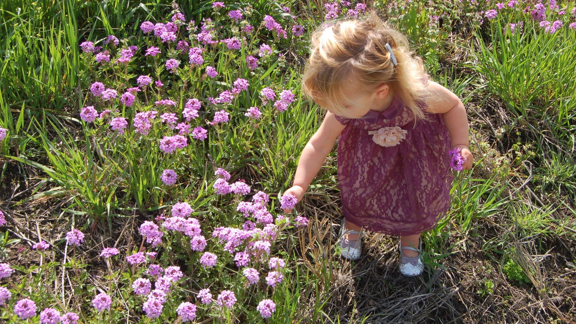 Consider the Wild Flowers