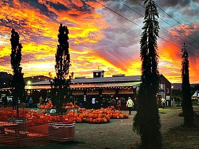 bella-farm-store-pic-4-3
