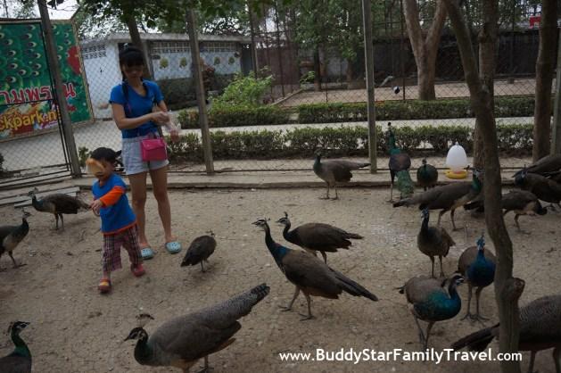 สวนนกยูงสามพราน,เด็ก,เที่ยว,พาลูกเที่ยว,กรุงเทพ