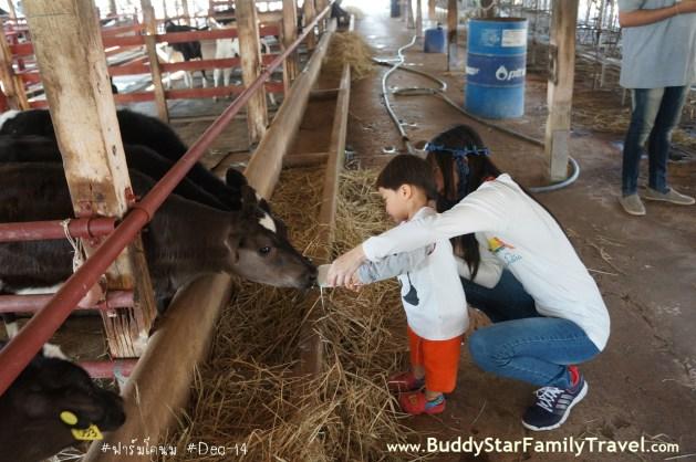 ป้อนนม,วัว,เด็ก,เที่ยว,ที่เที่ยว,พาลูกเที่ยว,เขาใหญ่,ครอบครัว