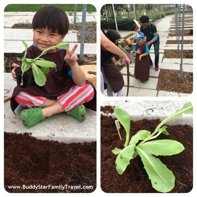 ปลูกผัก, โคโรฟิลด์, สวนผึ้ง, โคโรฟิว, Coro Field, สวนผึ้ง, รีวิว, เด็ก,เที่ยว,ที่เที่ยว,พาลูกเที่ยว,review