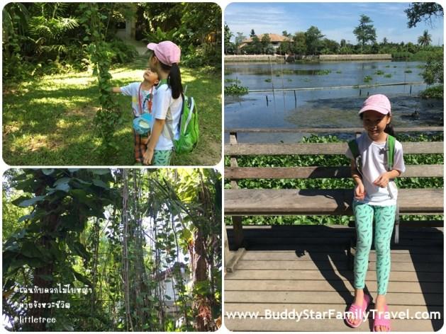 little tree garden เด็ก, ธรรมชาติ, ค่ายจังหวะแห่งชีวิต