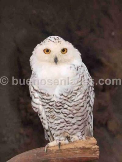 Fotos De Aves Rapaces Sancudas Fotos De Animales | Auto Design Tech