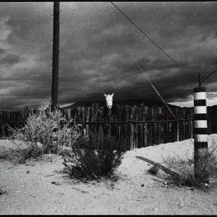 Horse, Mojave ©David Carol