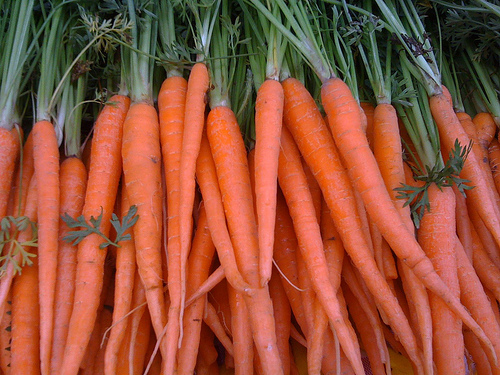 gmo-carrot-after