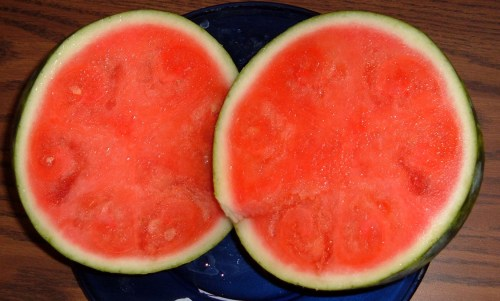 gmo-watermelon-after