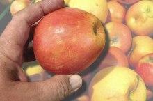 alimentazione_(foto_pictoscribe_382124496@flickr) frutta biotech ogm