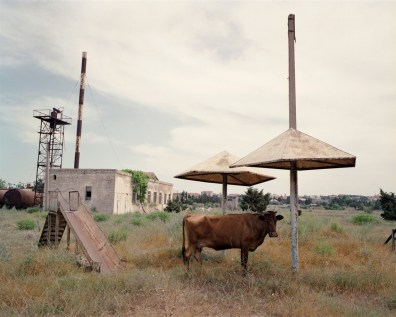 A cow stands in the shade in the grounds of a disused sanitorium of the Absheron Peninsula.