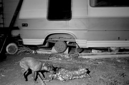Dog and carcass, Batesland, Pine Ridge Reservation. (2010)