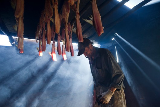 An elder makes dry fish at his cabin, outside of Fort Chipewyan. Many elders still live out on the land all year, coming into Fort Chipewyan periodically for supplies and to see their families.