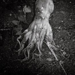 Octopus. Arles. 2010
