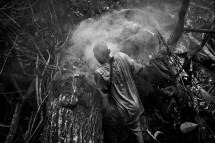 A baka pygmie man collecting honey tree. Village of Ndjibot, Dja Faunal Reserve.