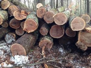 Logs aplenty