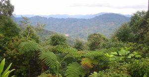 A beautiful culture misrepresented: discover the real Kokoda