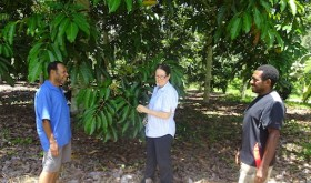 Galip nut a global opportunity for Papua New Guinea agriculture
