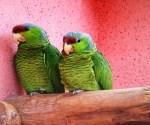 Un papagal, o rochie de mireasă