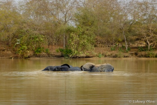 Elephants at Mole National Park, Ghana