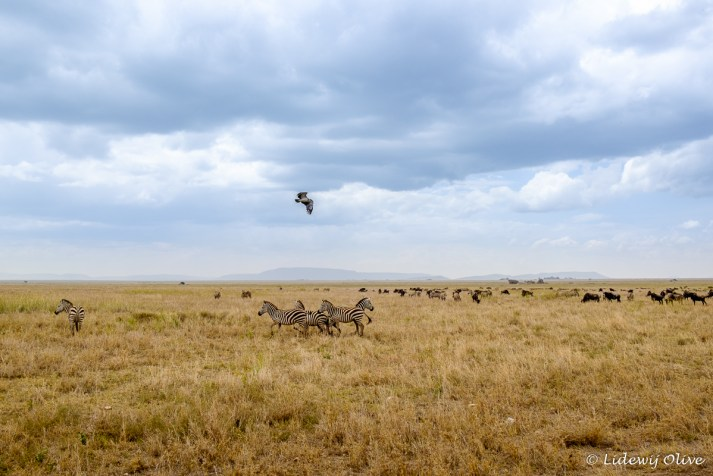 Scenery at Serengeti NP