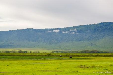 Hippo's in Ngorongoro