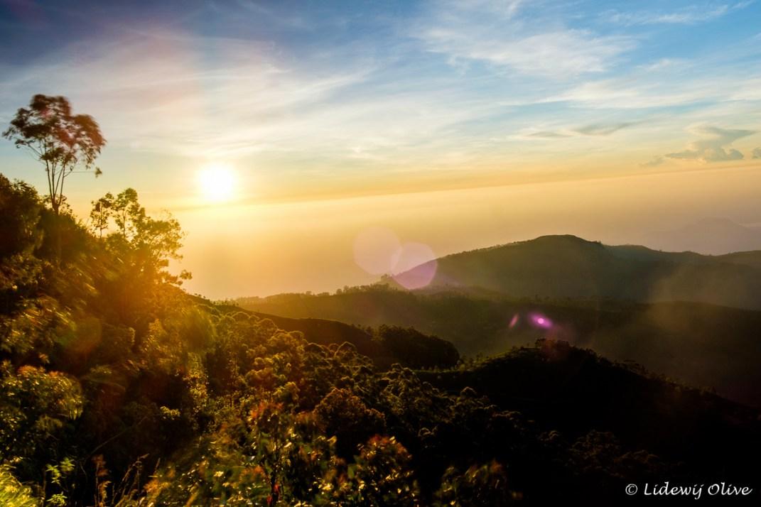 Mr. Lipton's view at sunrise