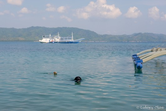 The dogs swam all the time, one even swam to the ship to welcome us on the island