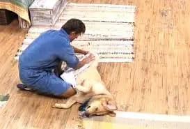Como Limpar as Patas do seu Cão