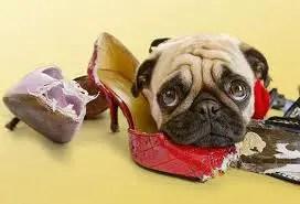 diminuir-a-ansiedade-do-cão