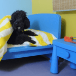 hotelzinho-cachorro