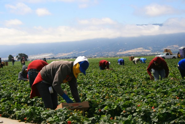 Farmworkers Fight For Overtime Pay and Better Working Conditions