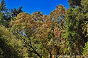 Santa Bernardino Mountains (9/6/14) Alena Nichols
