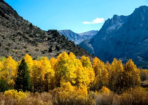 June Lake Loop (10/19/14) Greg Newbry