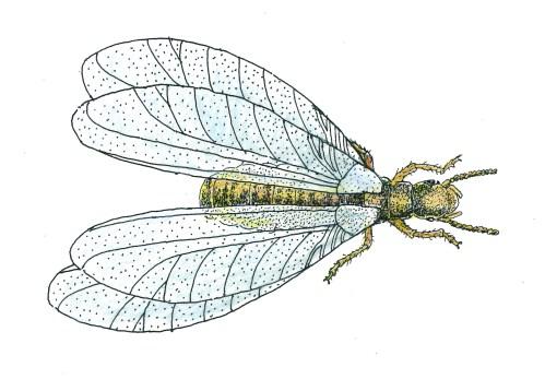 Medium Of Peachtree Pest Control
