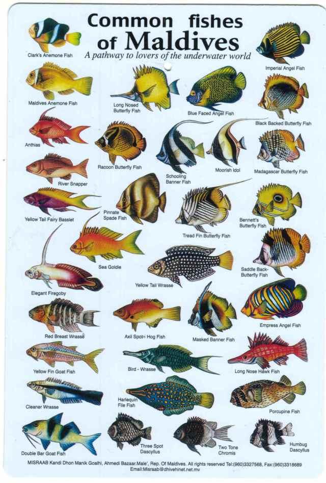 Tropical Fish Identification Chart